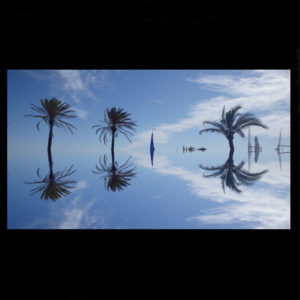 Mirror Palms